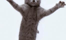 11 والپیپر با مزه با طرح گربه برای اندروید (بهمراه لینک دانلود)