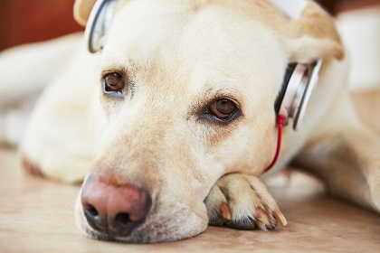 Headphones-for-dogs