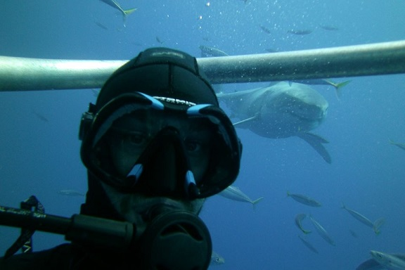 359576-shark-tank-selfie