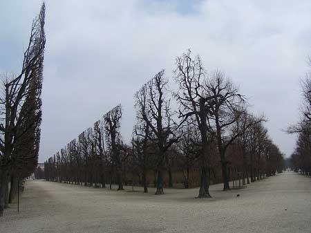 flat-trees