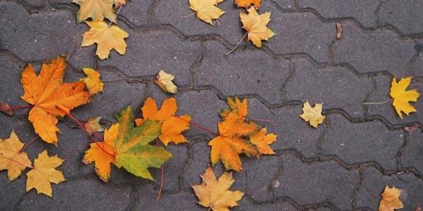 1441918724-syn-pop-1441755345-sidewalk-leaves