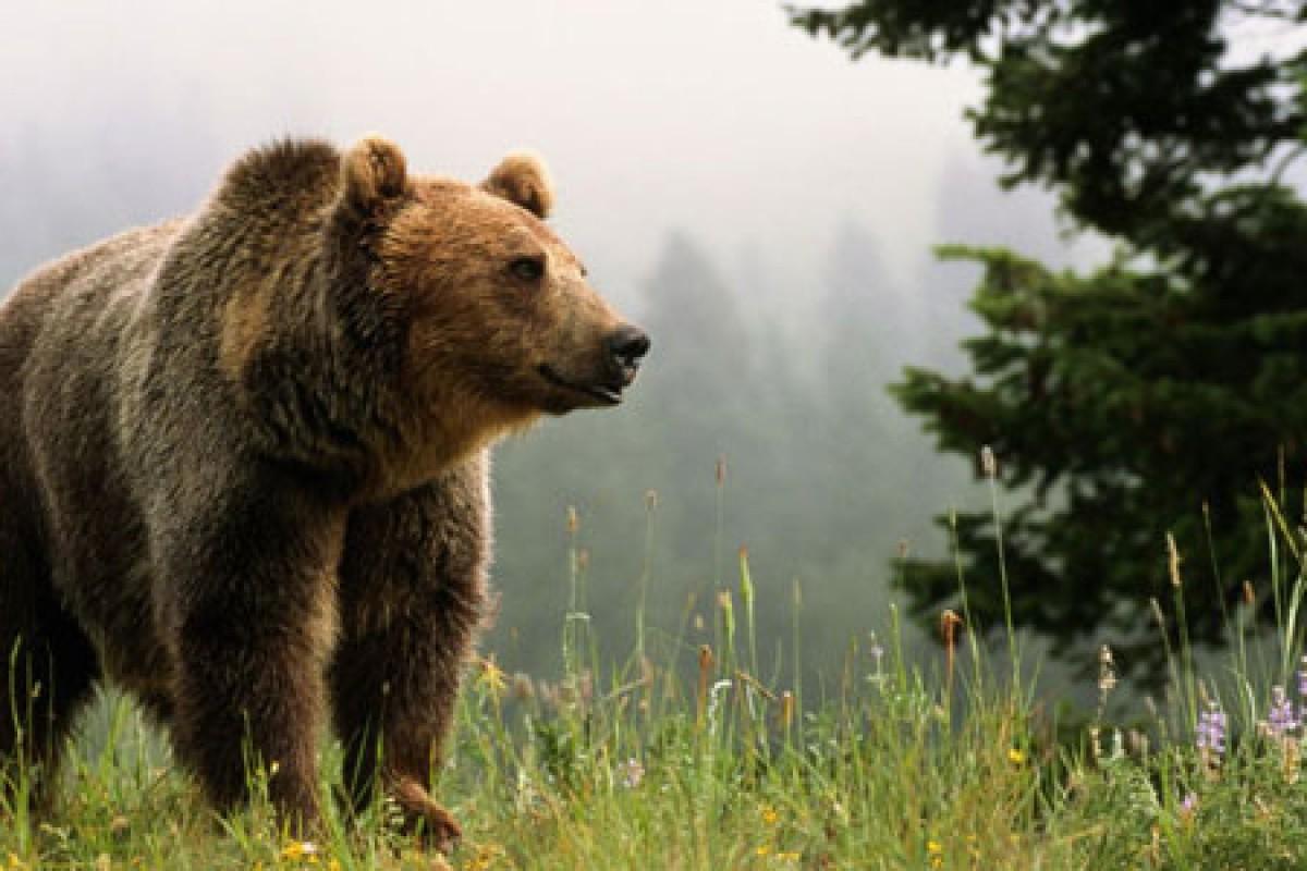انداختن عکس سلفی با خرسهای یک پارک گردشگری موجب تعطیلی آن شد!