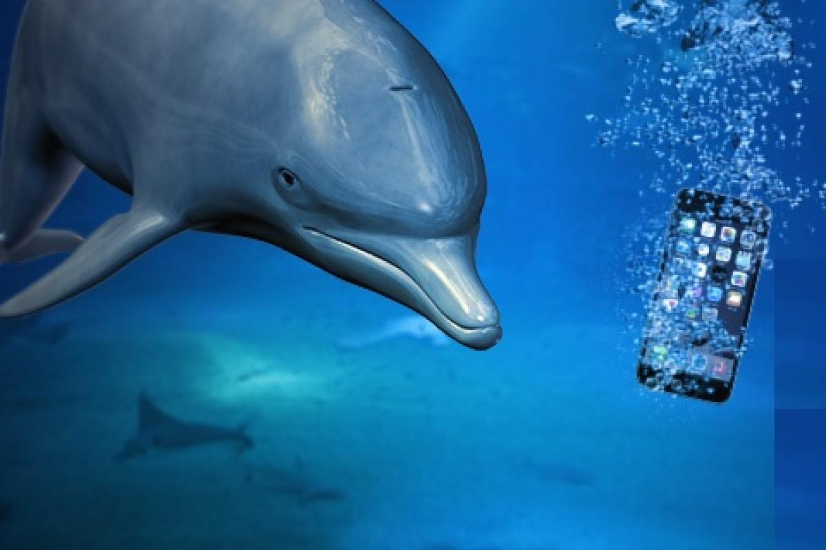 یک دلفین باهوش آیفون غرق شده در اقیانوس را به صاحبش بازگرداند!