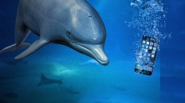 Dolphin-saves-iPhone