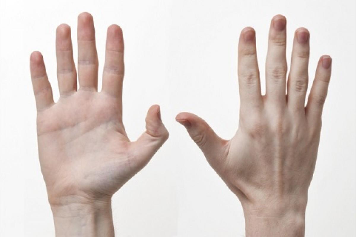چرا ظاهر دستانِ انسان، اینگونه است؟