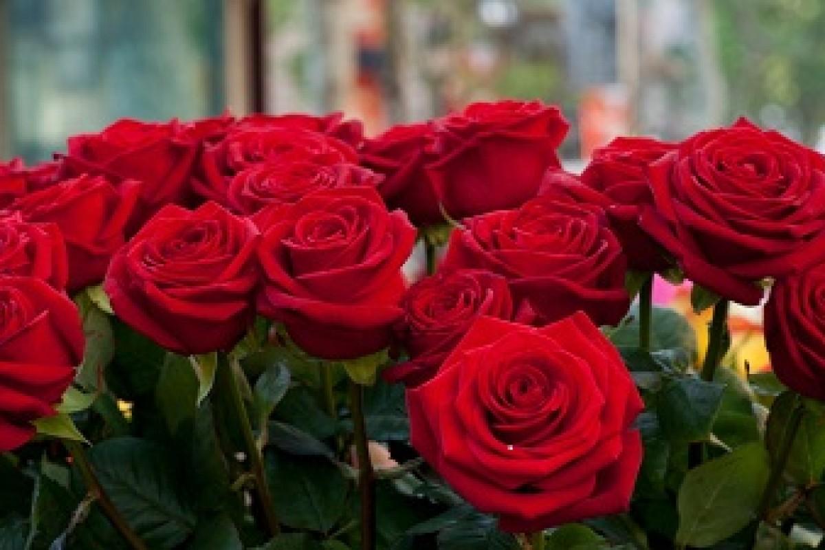 دانشمندان توانستند یک مدار الکترونیکی را در برگهای گل سرخ قرار دهند!