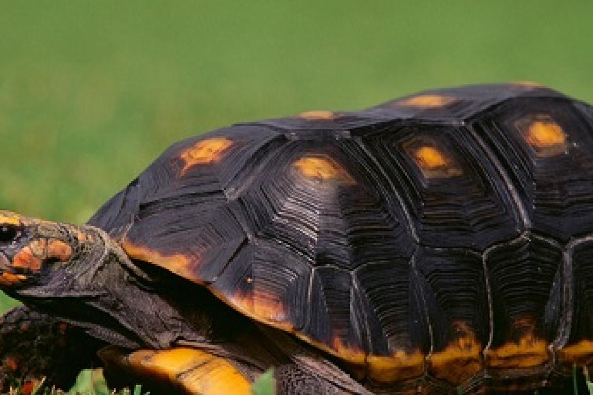 لاکپشتها بیشتر از پهپادها با هواپیما تصادف میکنند!