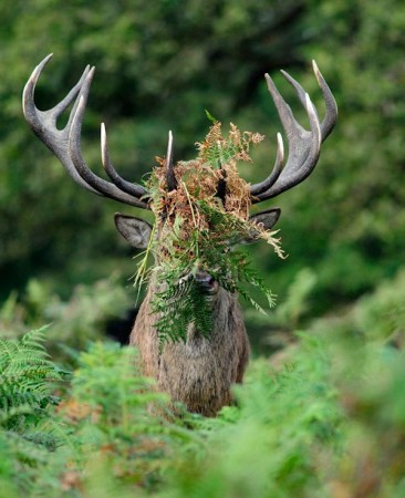 SILVER Runner up Comedy Wildlife Photography Awards
