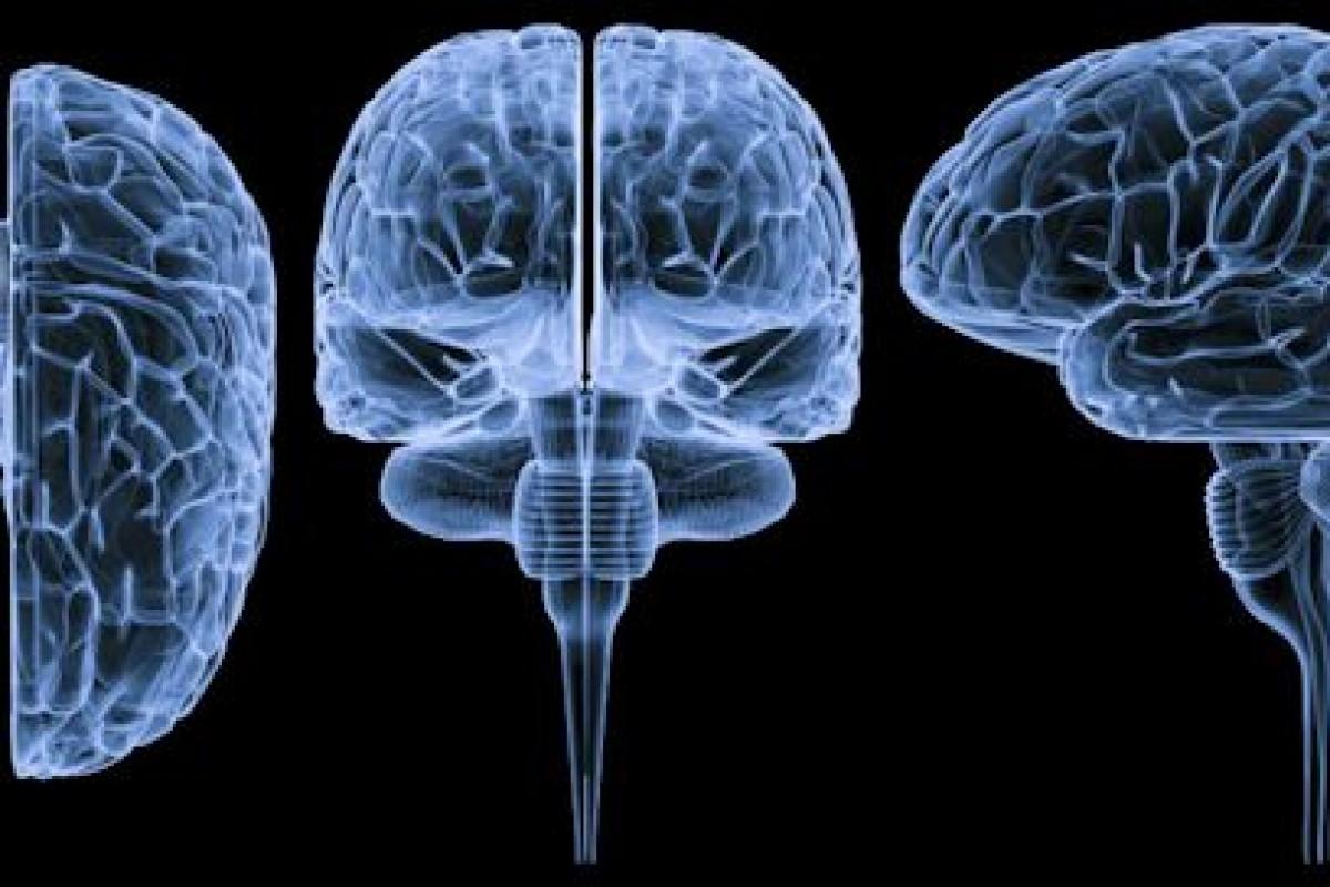 دانشمندان نحوه بیدار شدن انسان از خواب به وسیله مغز را کشف کردند