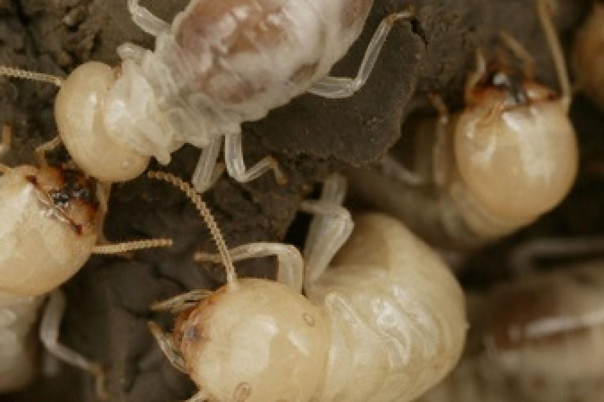 عجیب اما واقعی: حداقل ۱۰ هزار حشره در خانه شما زندگی میکند