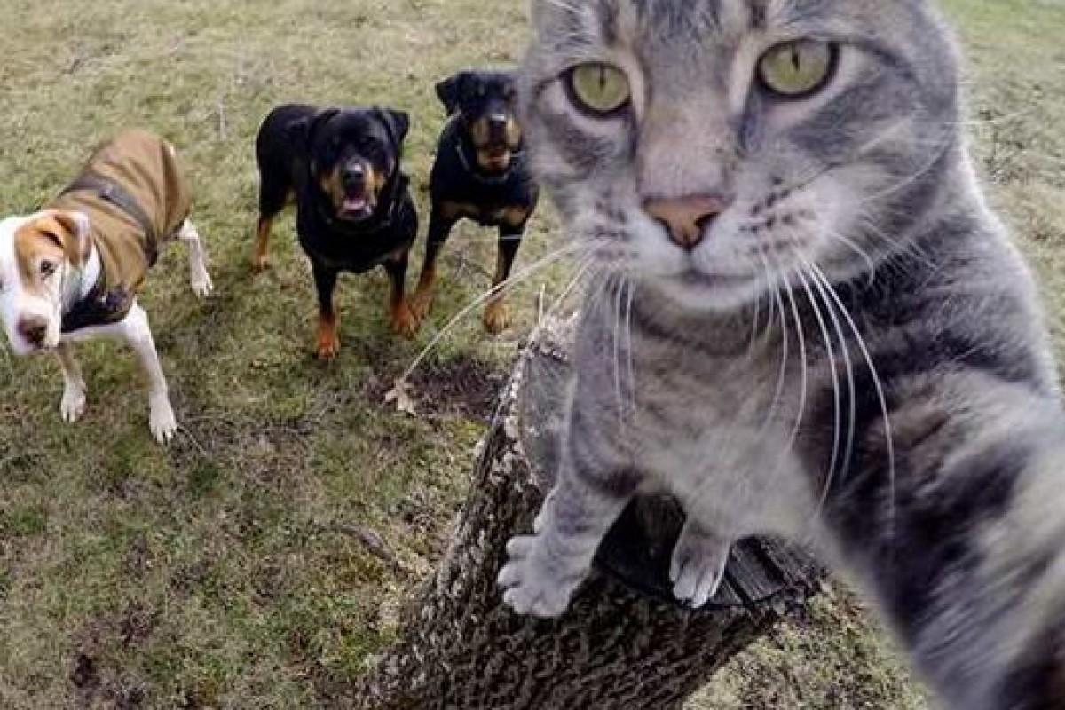 این گربه عکس سلفی را از شما هم بهتر میگیرد!