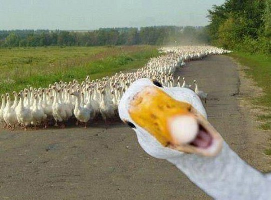 Ordak-Selfie