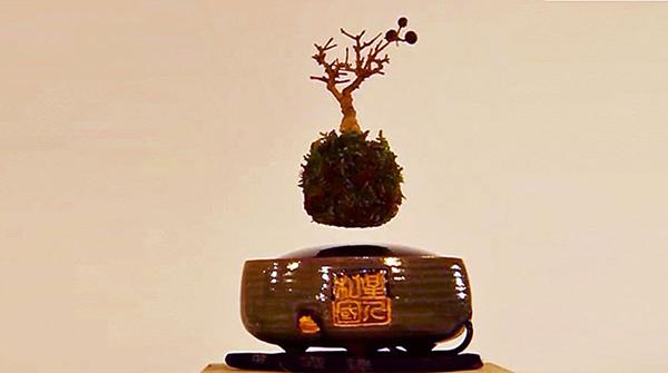 درخت بونسای معلق، ترکیب سنت و مدرنیته