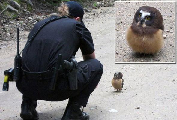 police-selfei