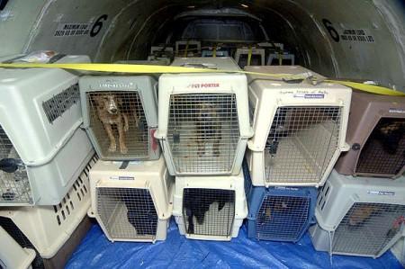 11.21.15-Delta-Will-No-Longer-Make-Pets-Fly-as-Cargo3