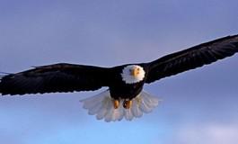 تعلیم عقابها برای مقابله با پهپادهای جاسوسی!