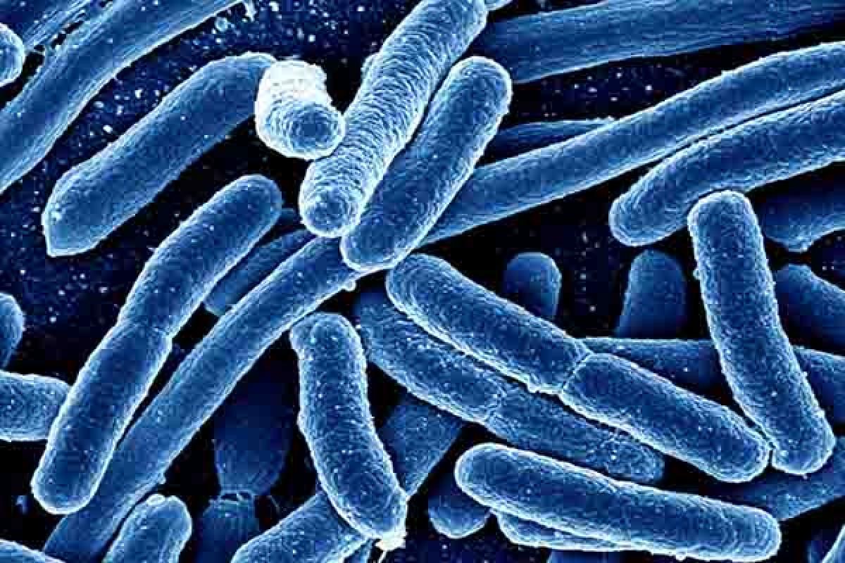 آیا میتوان برای مقابله با بیماریها از میکروبها استفاده کرد؟