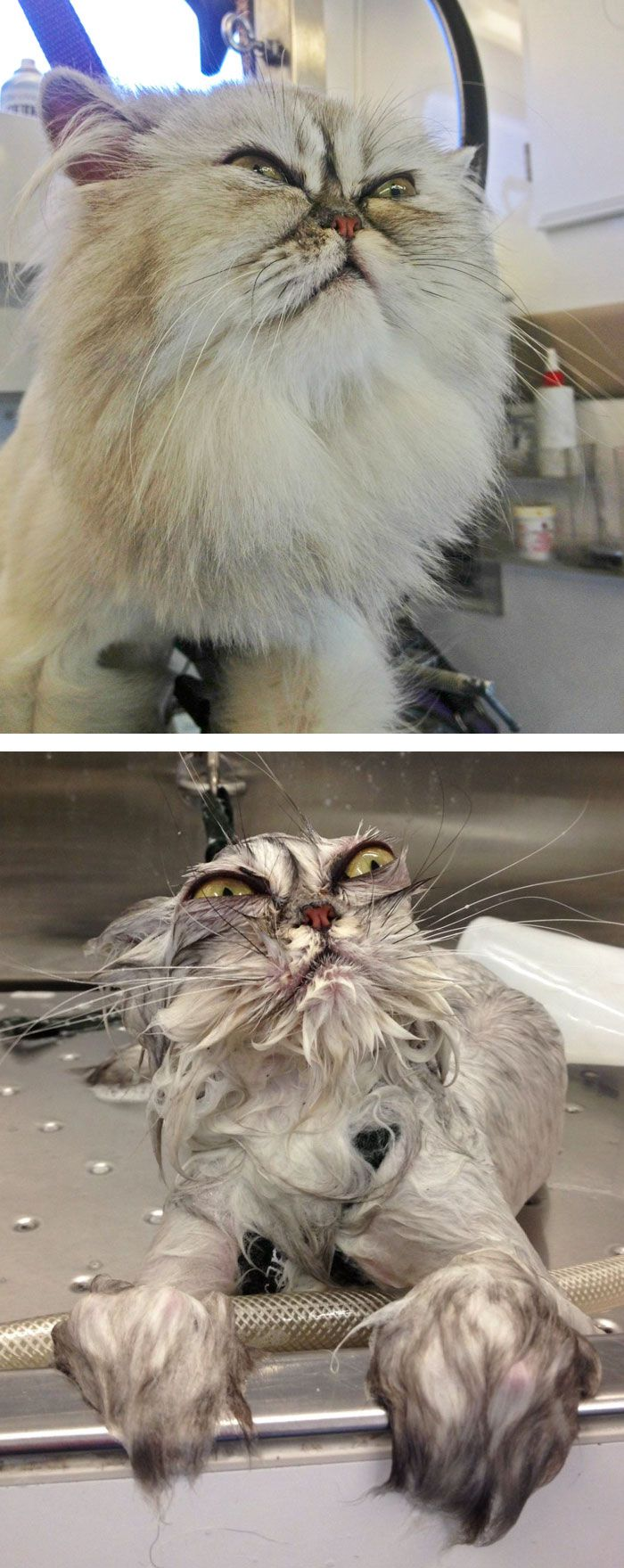 funny-wet-pets-before-after-bath-dogs-cats-49-5728af03c4553__700