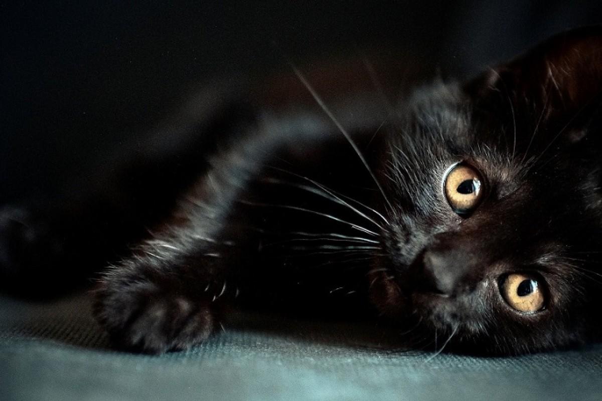 چرا گربه سیاه به عنوان نماد بدشانسی معروف شده است؟!