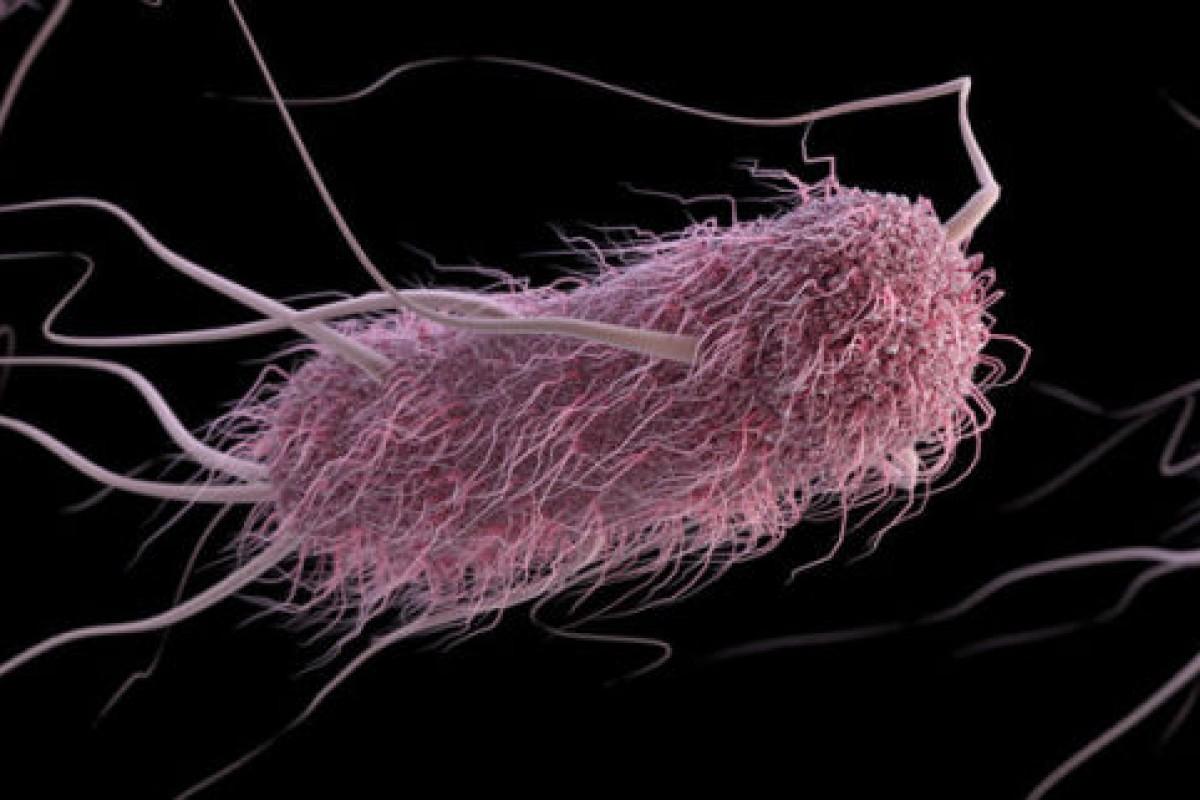 تبدیل باکتری به هارد دیسک زنده توسط محققان دانشگاه هاروارد!