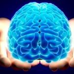 human brain itresan.com