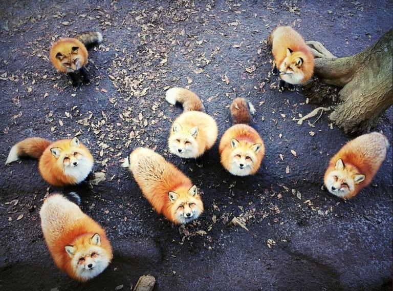 عکاس: Erica Wu- بهترین عکس در بخش عکاسی از حیوانات