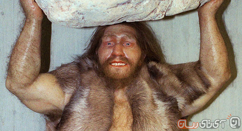 neanderthalAP