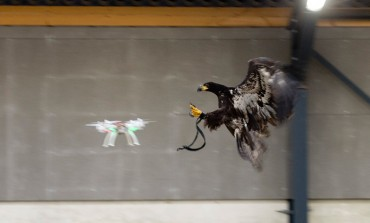 استفاده پلیس هلند از عقاب برای گرفتن پهپادهای ناشناس!