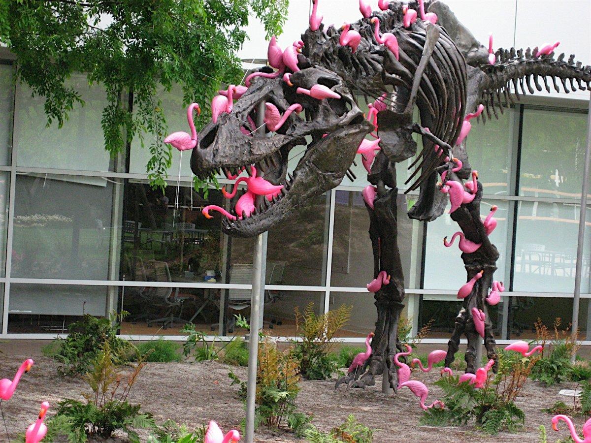 یکی از چیزهای معروف دیگر، مجسمه دایناسوری است که فلامینگوها دورهاش کردند. شایعهای که کارکنان گوگل بیان میکردند این بود که این دایناسور یک یادآور برای کارمندان است که منقرض نشوید.