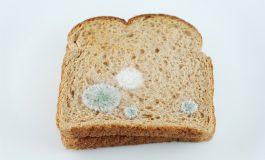آیا غذاهای کپک زده برای سلامتی ما ضرر دارند؟
