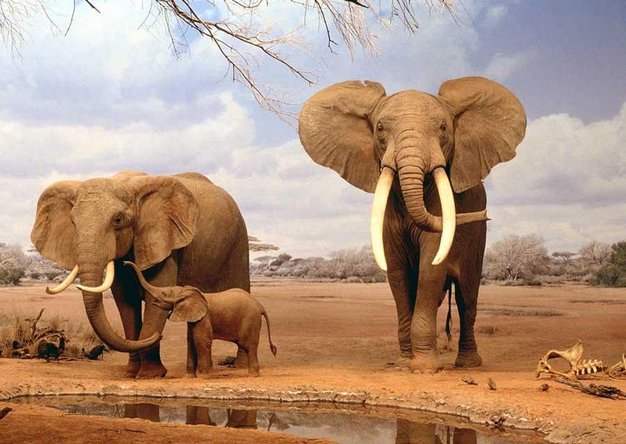 حافظه فیلها