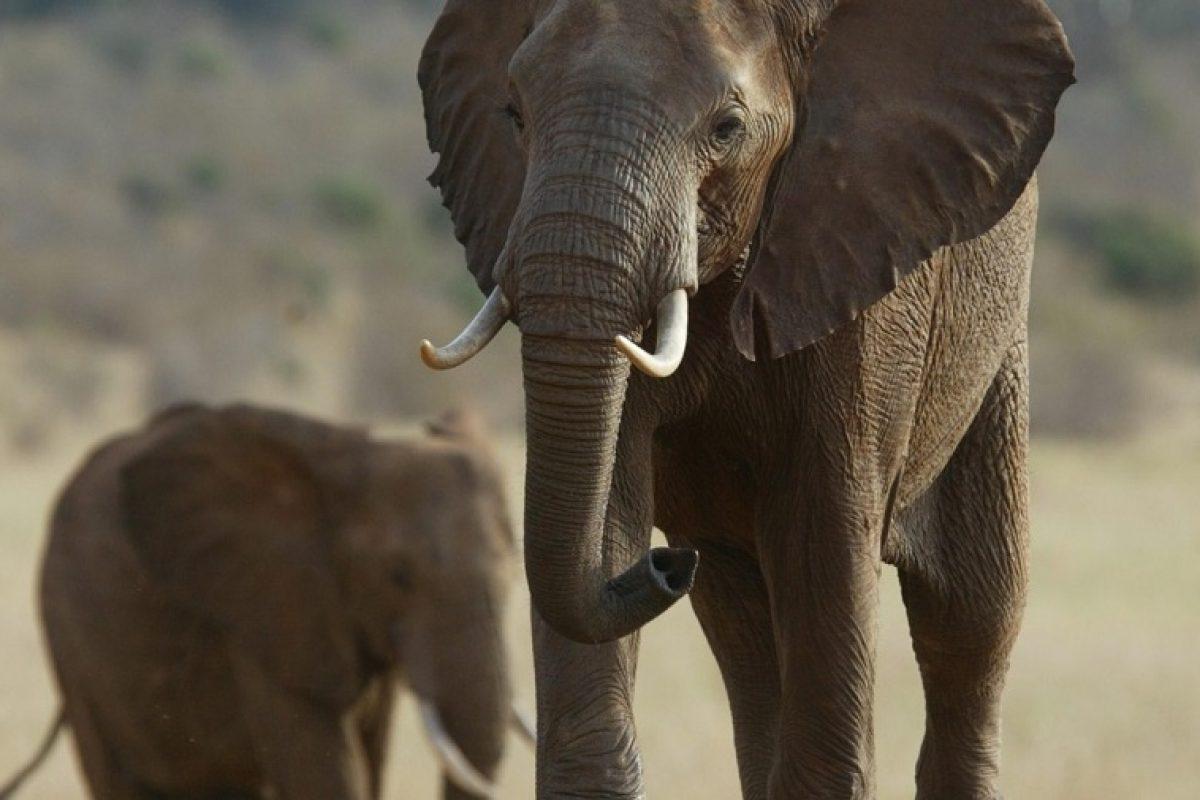 چه چیزی باعث تکامل حیوانات نسبت به سایر موجودات شده است؟!