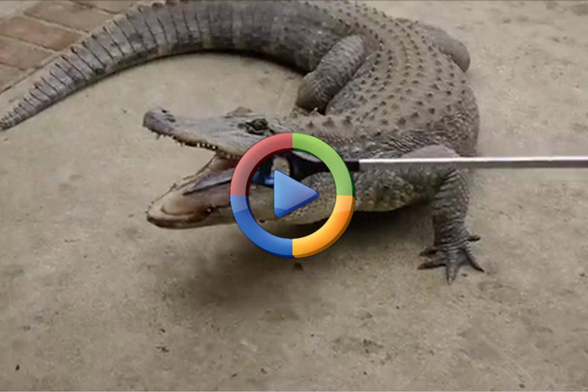 وقتی آیفون ۷ اپل خوراک یک تمساح میشود! (ویدئو اختصاصی)