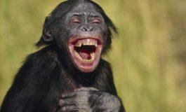 آیا حیوانات هم مانند انسان هنگام شادی میخندند؟!