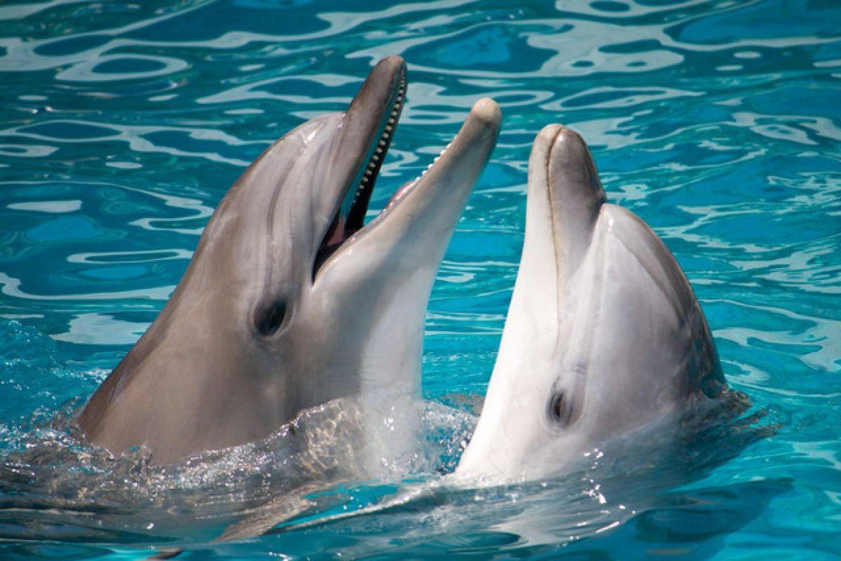 دانشمندان پیشبینی کردهاند که تا سال ۲۰۲۱ درک زبان دلفینها ممکن خواهد شد