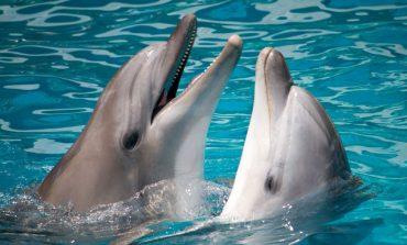 دانشمندان پیشبینی کردهاند که تا سال 2021 درک زبان دلفینها ممکن خواهد شد