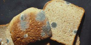 اگر نان کپک زده را بخوریم چه اتفاقی میافتد؟