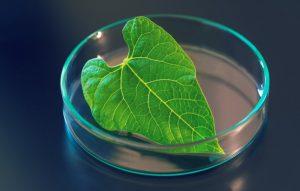 دانشمندان با فتوسنتز مصنوعی سوخت هیدروژنی تولید کردهاند