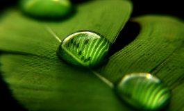10 نکته مهم که برای عکاسی ماکرو باید بدانید