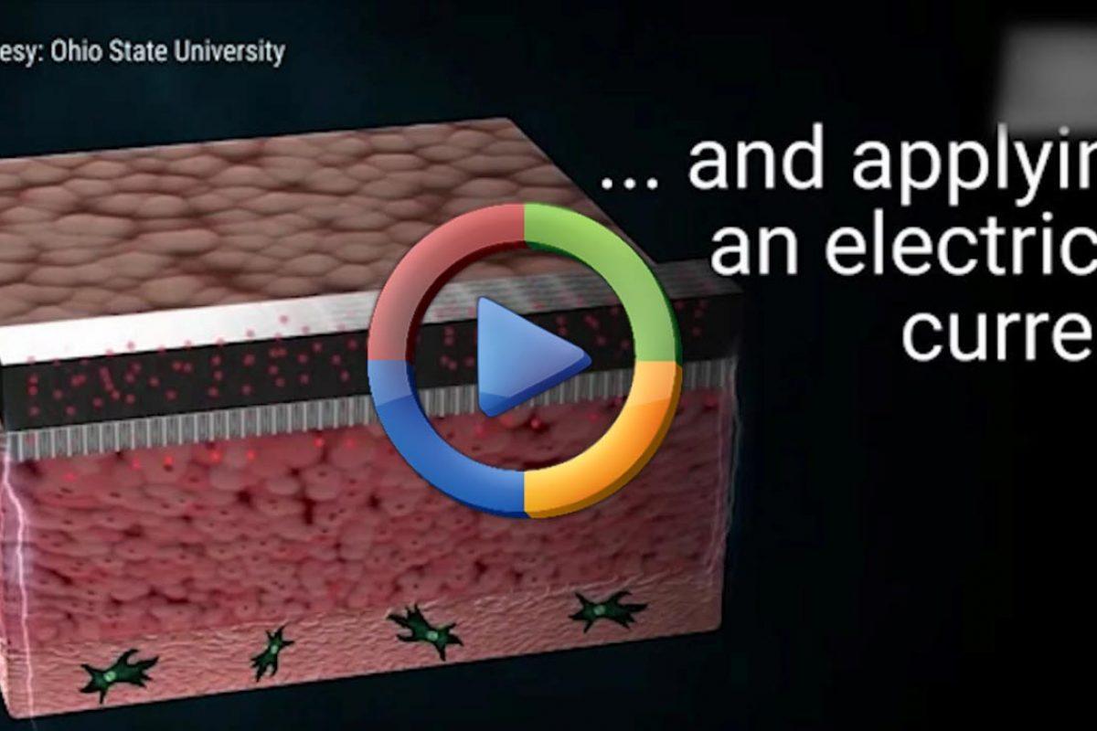 ترمیم بافتهای آسیب دیده بدن به کمک یک چیپ الکترونیکی (ویدئو اختصاصی)