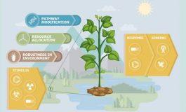 موسسه DARPA قصد تولید گیاهانی را دارد که به عنوان سنسورهای زیستمحیطی عمل میکنند