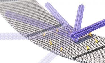 نانوربات سرعتی DNA میتواند منجر به ایجاد کارخانههای مولکولی شود