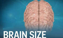آیا اندازه مغز شما میزان هوشتان را تعیین میکند؟!