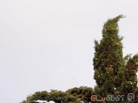 Huawei-P20-Pro-Review-Mojtaba-29-450x338 بررسی هواوی P20 پرو: کپی برابر اصل!