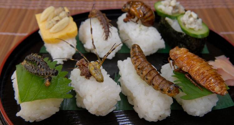 eating-insects هر فرد سالانه چه مقدار حشره مصرف میکند؟!