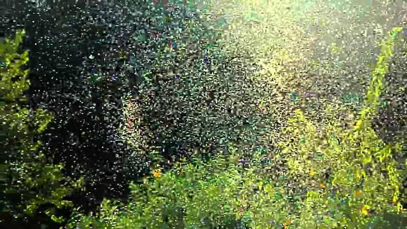 maxresdefault-3 چرا پشههای ریز در طبیعت به دور هم تجمع میکنند؟